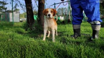 Pies z asylu