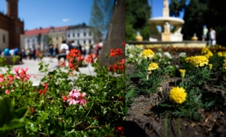 kwiatki w mieście